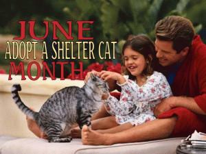 Adopt a Cat free digital signage content